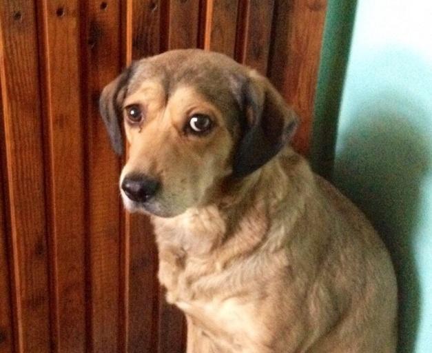 ВКрасноярске собачка три дня просидела около умершего хозяина