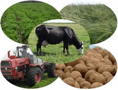 Красноярские фермеры-животноводы могут получить гран в30 млн. руб.