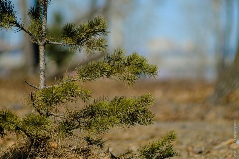 Апрель вКрасноярске будет рекордно теплым— Синоптики