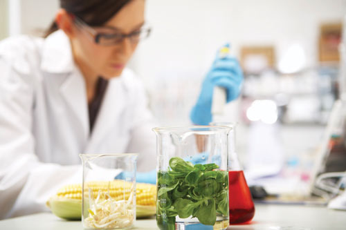 Больше полутонны овощей сняли среализации вОрловской области