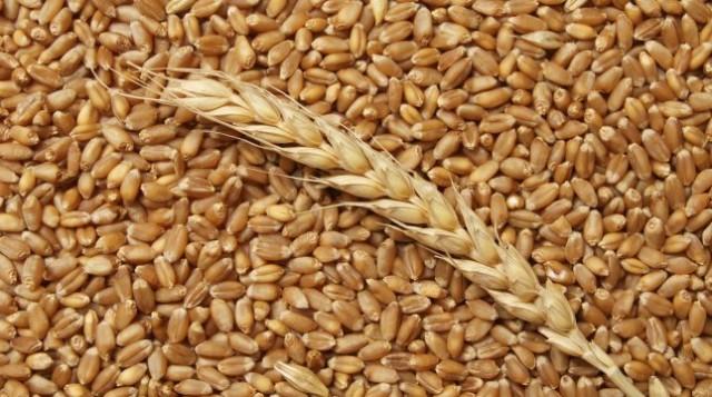 Российская Федерация собрала 122,5 млн. тонн зерна к18ноября