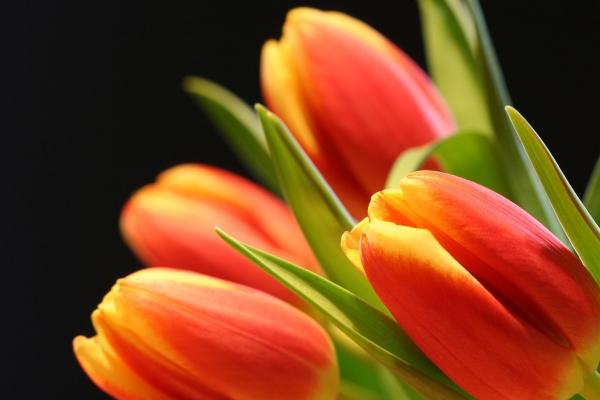 ВКрасноярске срезали первую партию праздничных цветов