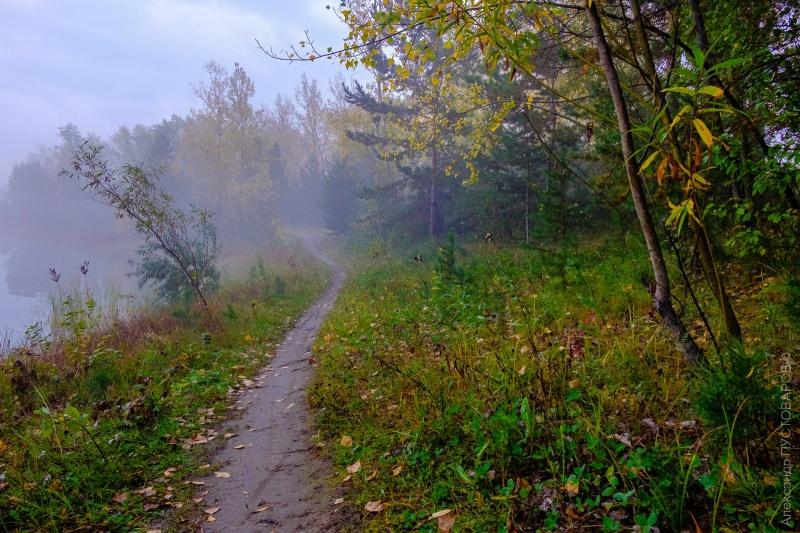 ВЗеленодольском районе влесу заблудились сразу 6 грибников